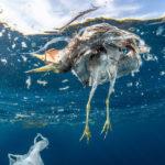 animali e plastica