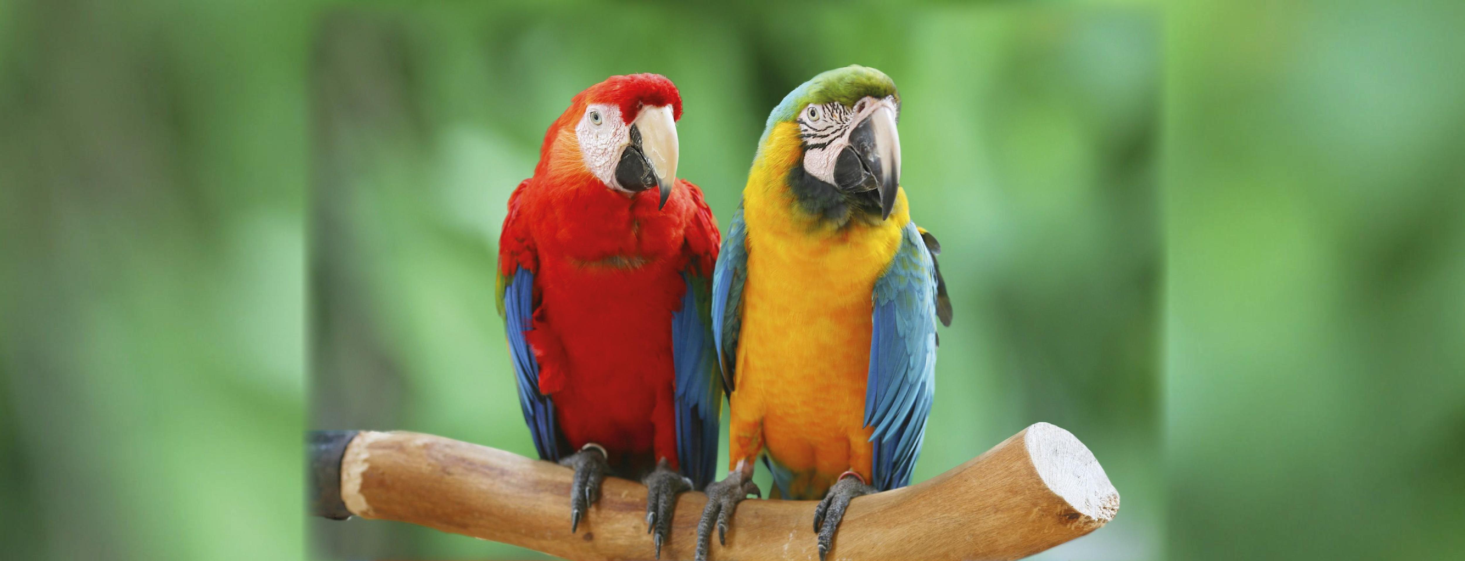 pappagalli-01